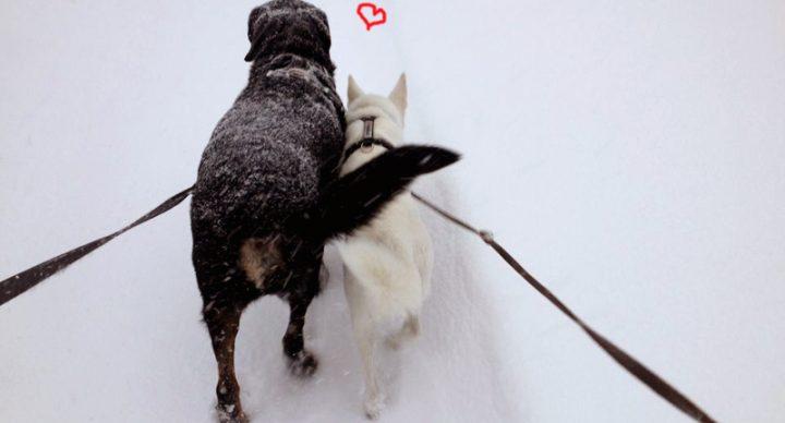 La Politesse Inter-Canine