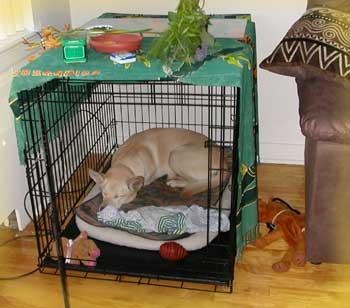 Mettre son Ami en Cage